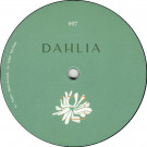 Various - DAHLIA 997 - Dahlia - DAHLIA 997