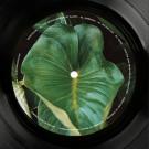 Edanticonf - The Metamorphosis Of Plants  - Silent Season - SSV16